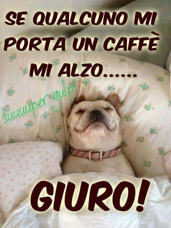 Un cane che dorme con divertente citazione Se qualcuno mi porta un caffè mi alzo... Giuro!
