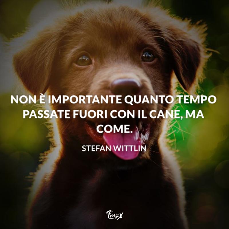 Immagine con citazione stefan per frasi migliore amico cane