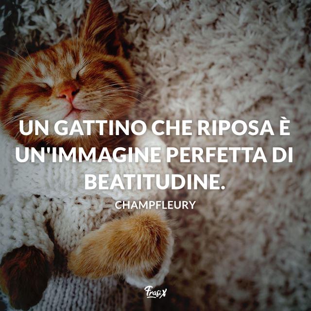Un gattino che riposa è un'immagine perfetta di beatitudine.