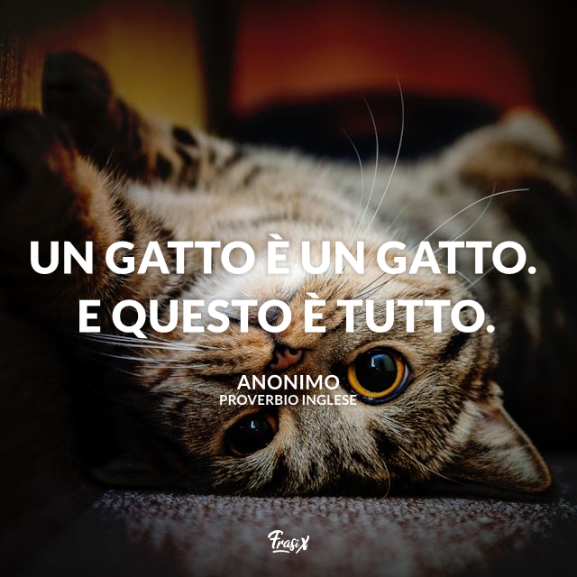 Proverbi sui gatti