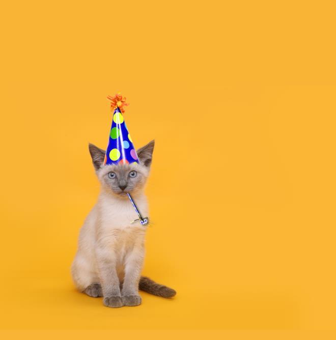 Gatto con un cappellino in testa