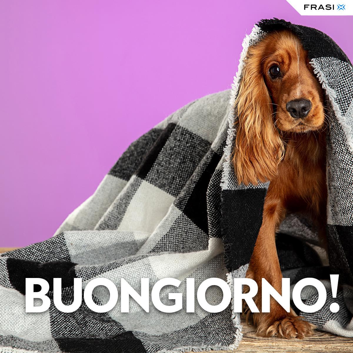 Messaggi buongiorno animali cane coperta