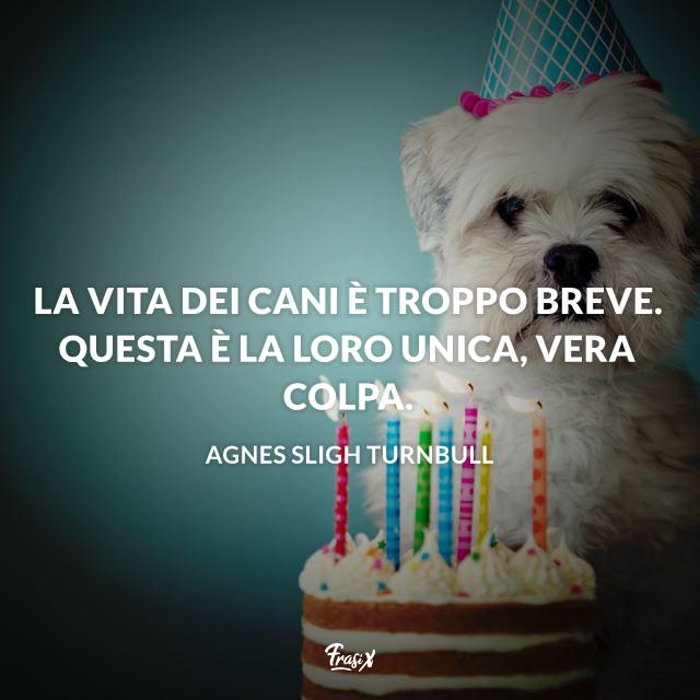 Frasi d'amore per i cani