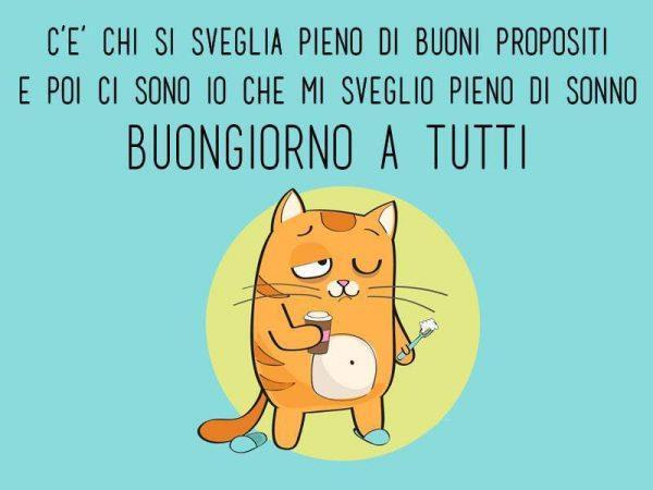 Immagine simpatica con un gatto e citazione del Buongiorno