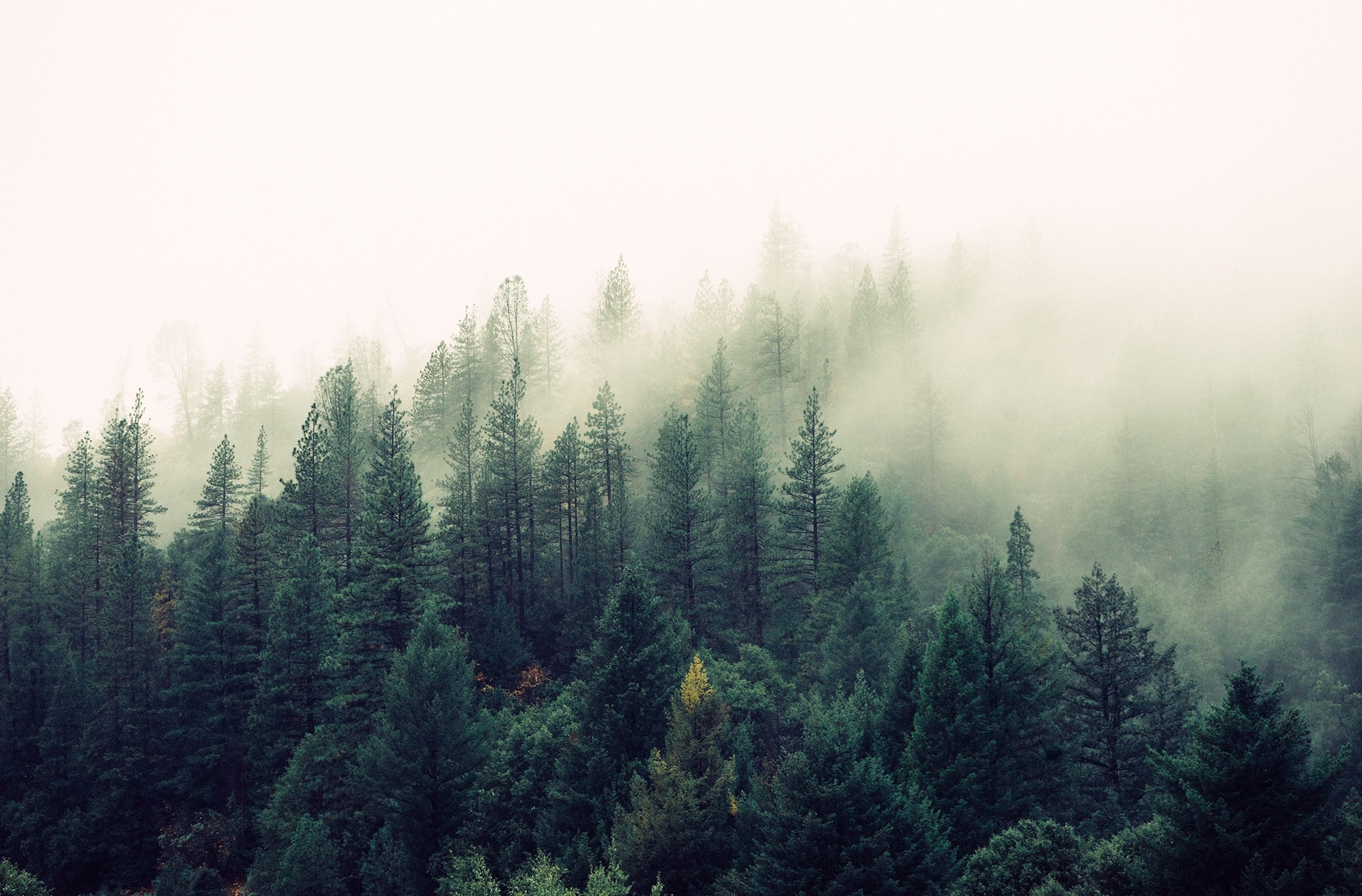 Copertina frasi sulla nebbia