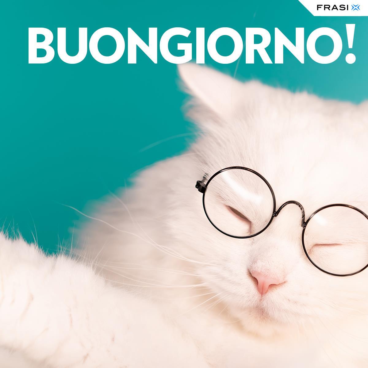 Messaggi buongiorno animali gatto occhiali