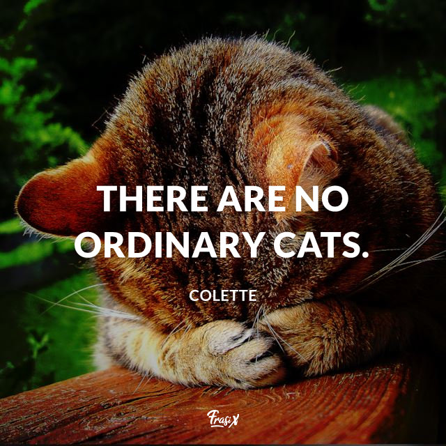 There are no ordinary cats.