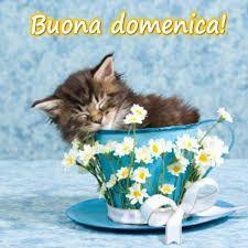 Un gattino che dorme in una tazza da caffè