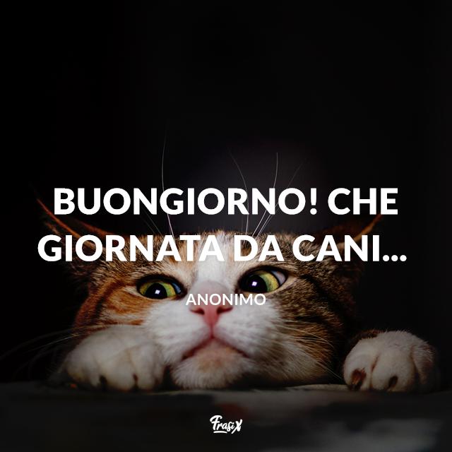 Immagine divertente con gattino e scritta Buongiorno! Che giornata da cani...