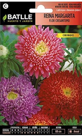 Semi di Fiori - Regina Margherita Fiore Crisantemo - Batlle