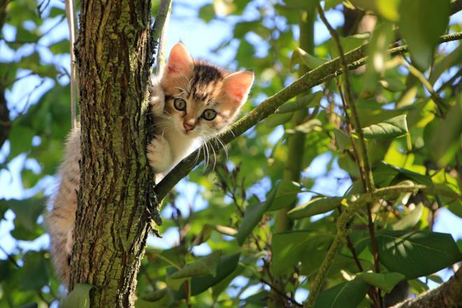 Gatto su albero