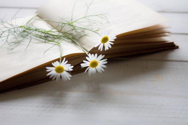 Libro con adagiate sopra delle margherite