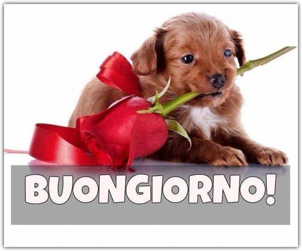 Un cagnolino con in bocca una rosa rossa e scritta Buongiorno!