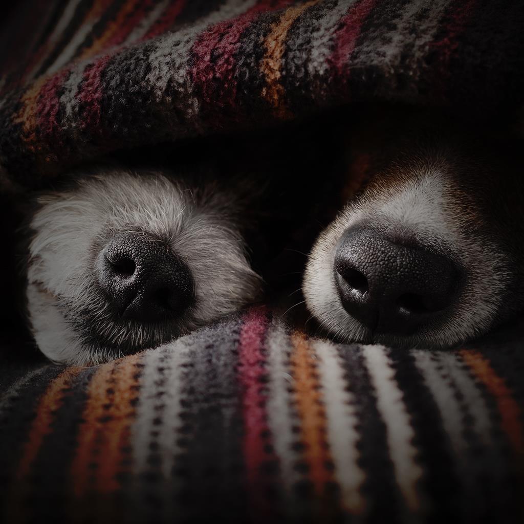 Copertina frasi migliore amico cani