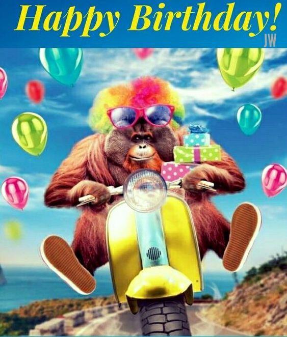 uno scimmione su una vespa - Immagini di buon compleanno, le più simpatiche da scaricare gratis