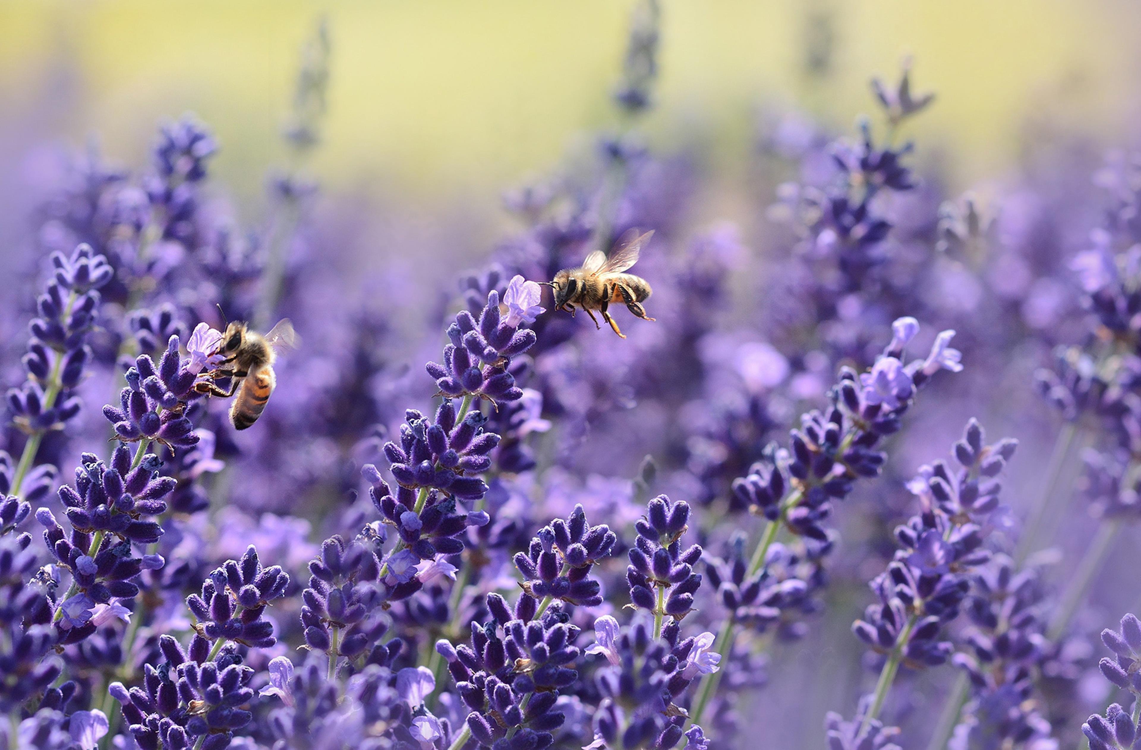 Copertina frasi sulle api