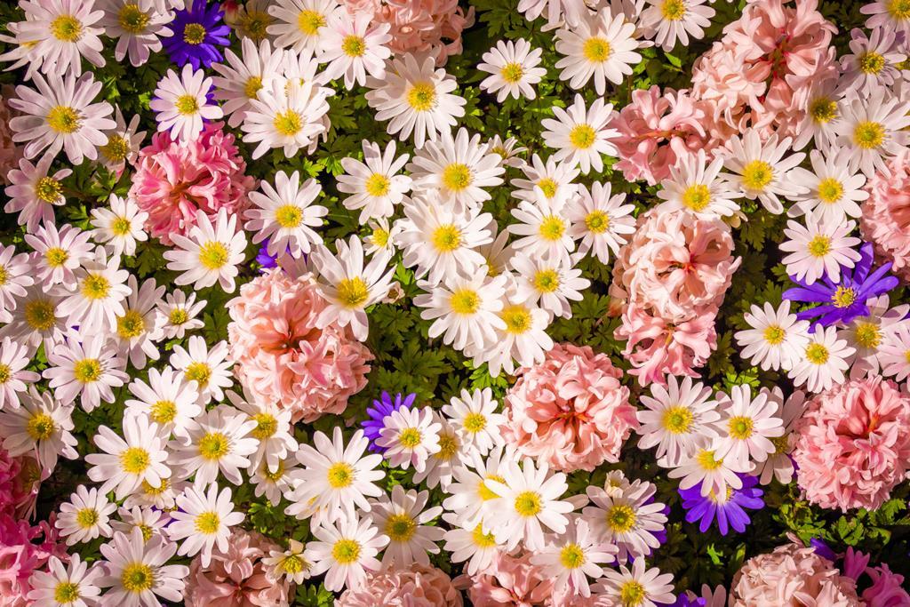 Copertina frasi sui colori dei fiori