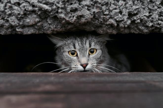 Gatto si nasconde spaventato