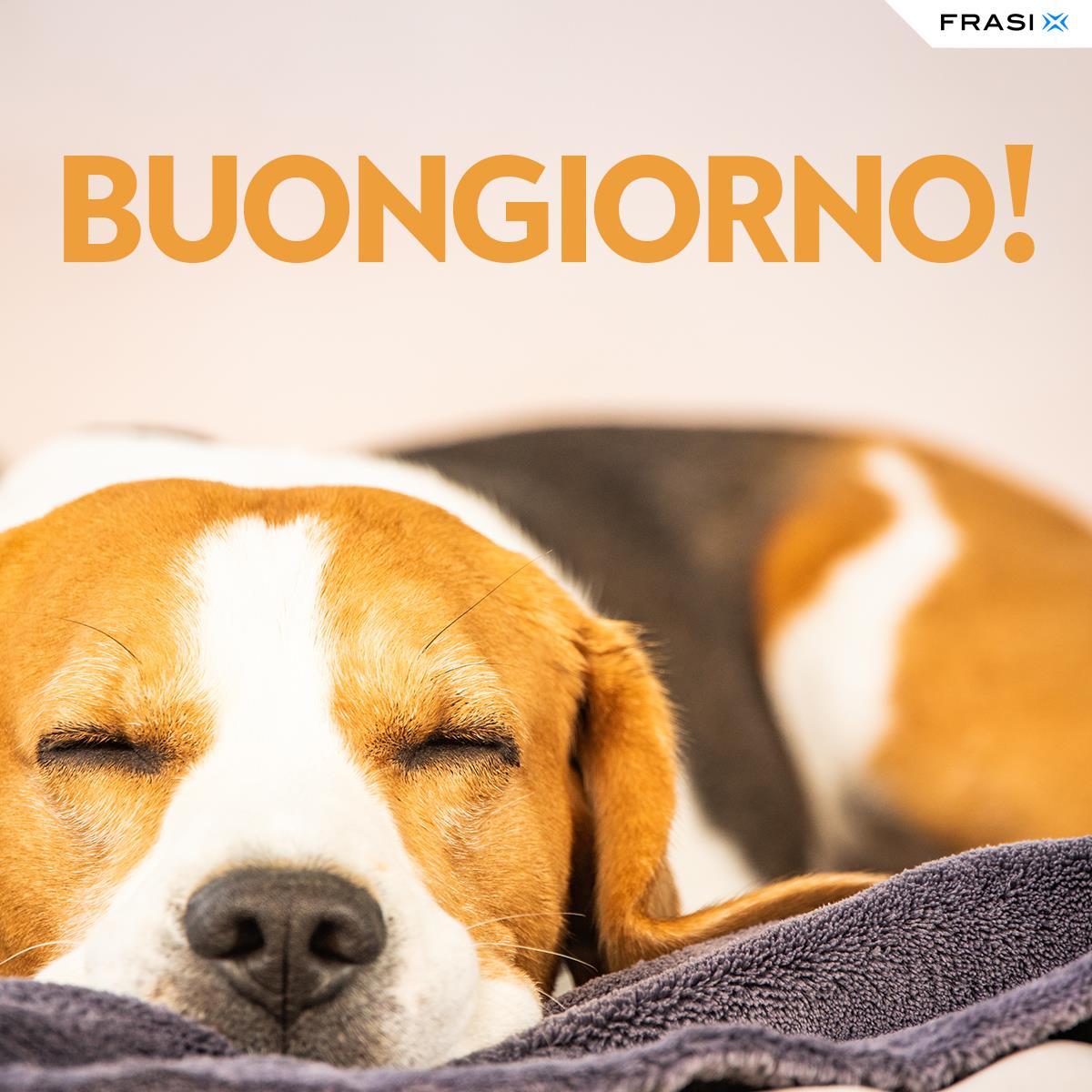 Messaggi buongiorno animali beagle