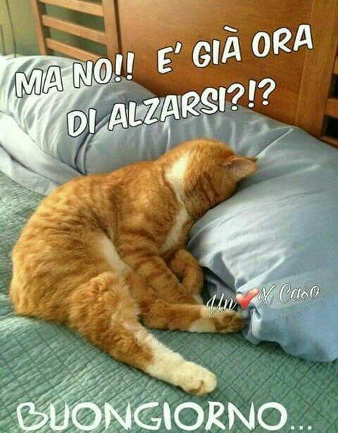 Un gatto che dorme con divertente citazione Ma no! E' già ora di alzarsi?!? Buongiorno
