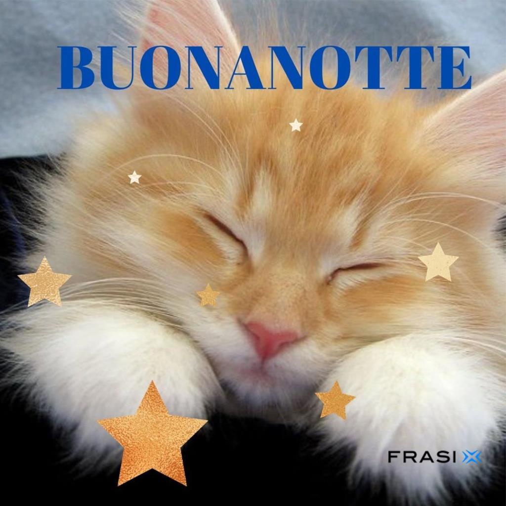 Immagine con gatto che dorme e auguri Buonanotte