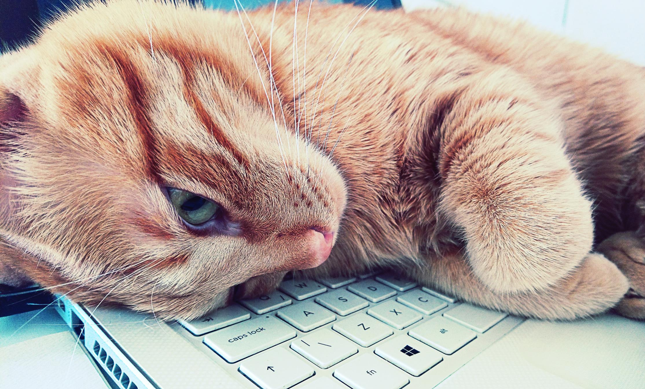 Gattino sdraiato un PC