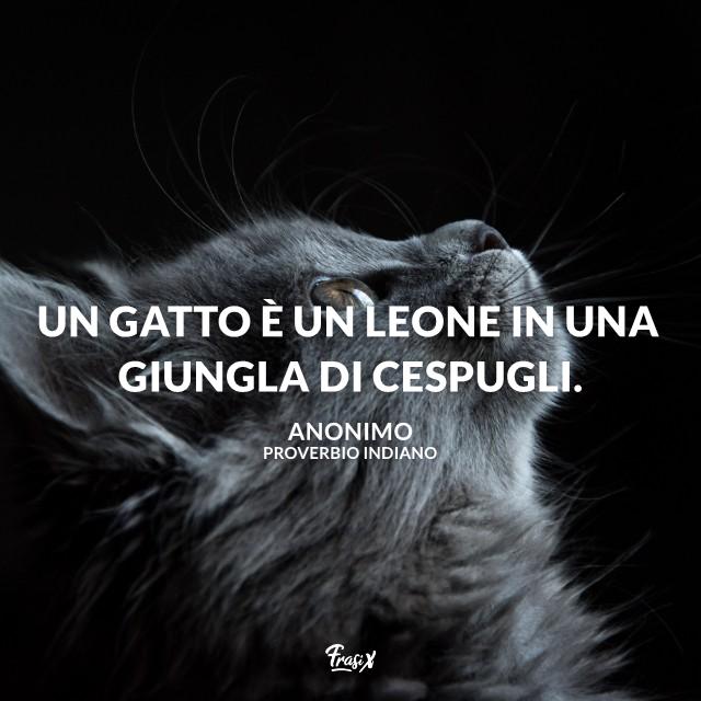 Un gatto è un leone in una giungla di cespugli.