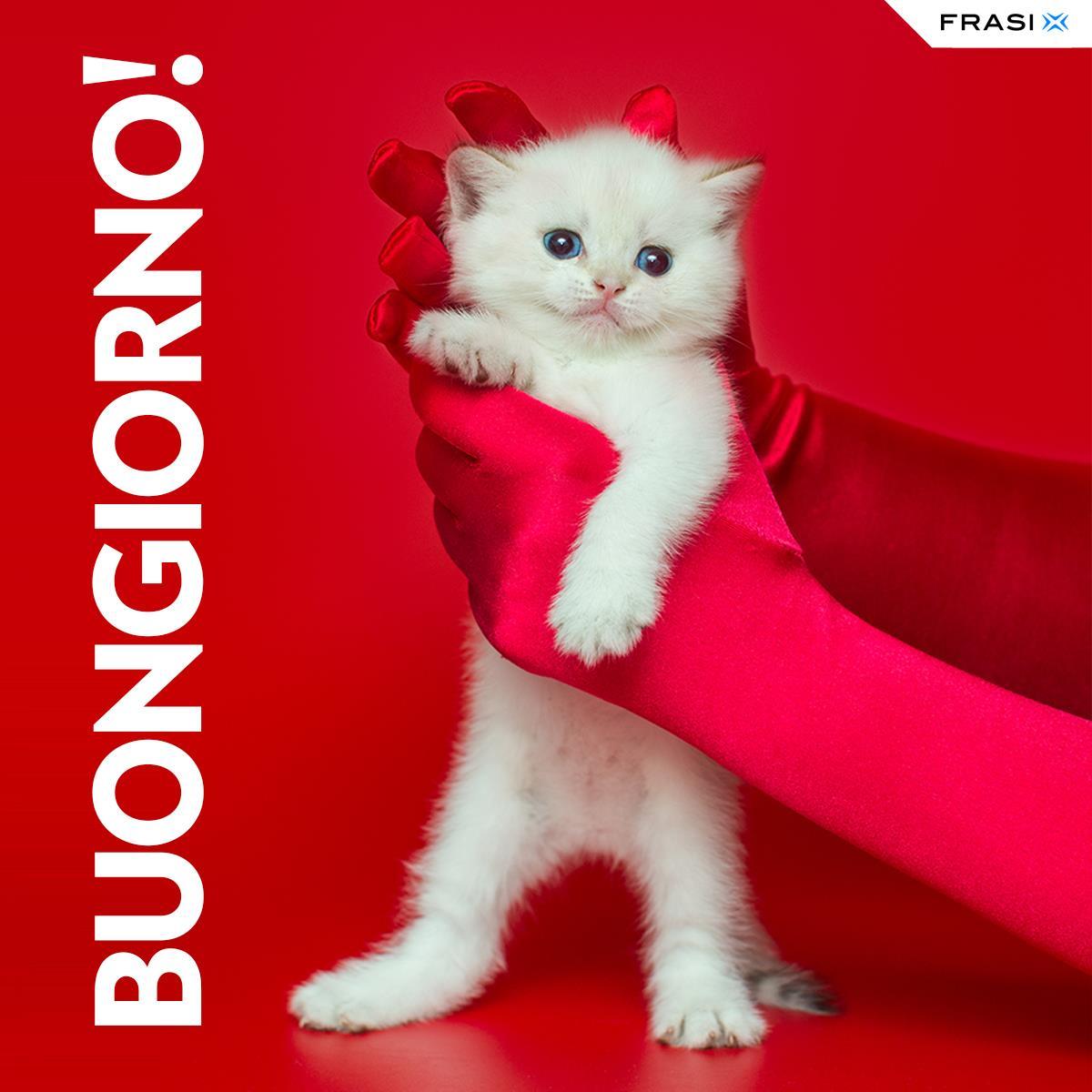 Messaggi buongiorno animali gatto bianco