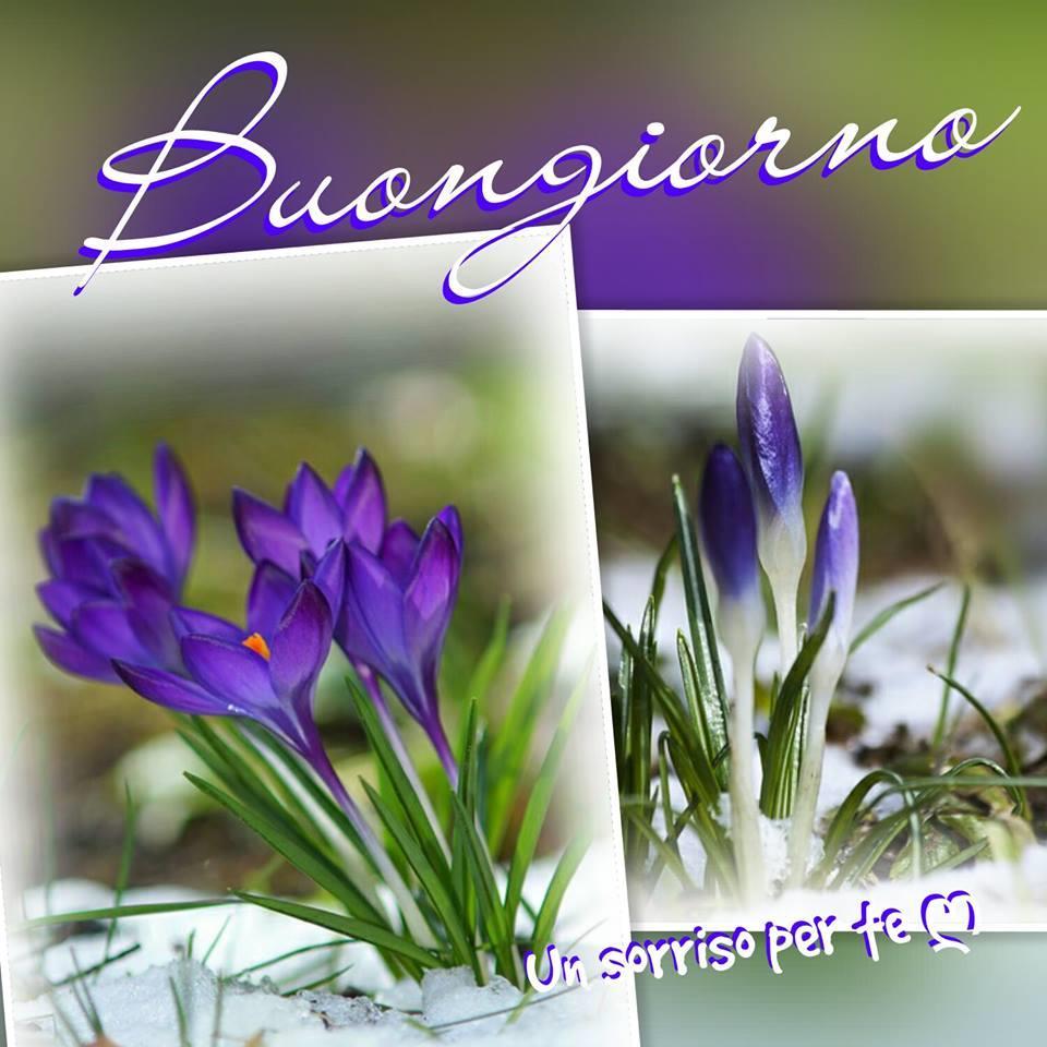 Una composizione floreale con scritta Buongiorno
