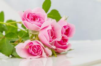 Copertina frasi sulle rose