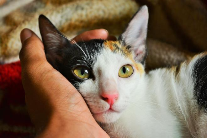 Per accarezzare un gatto preferire il muso
