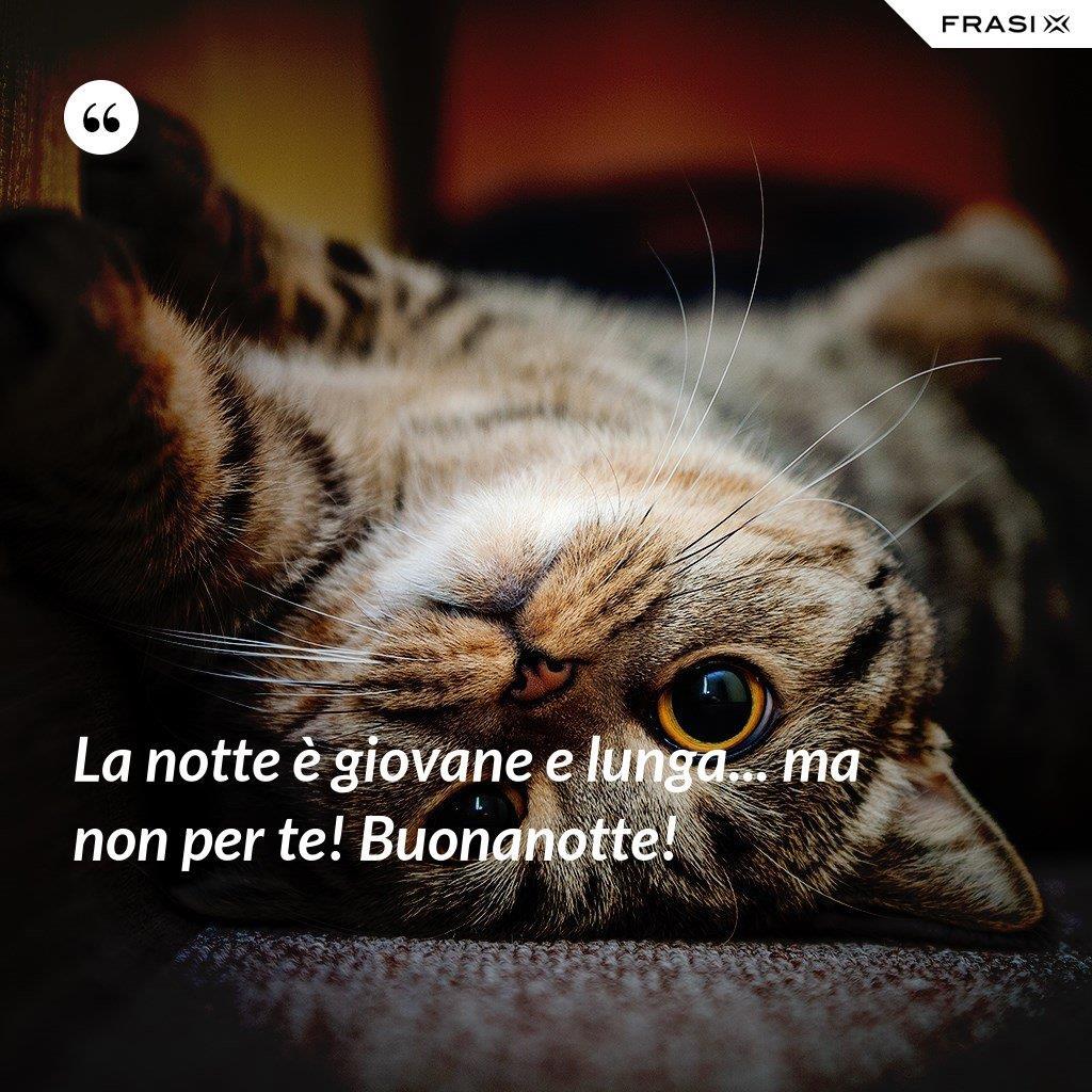 Immagine buonanotte divertente con gatto e citazione La notte è giovane e lunga... ma non per te! Buonanotte!