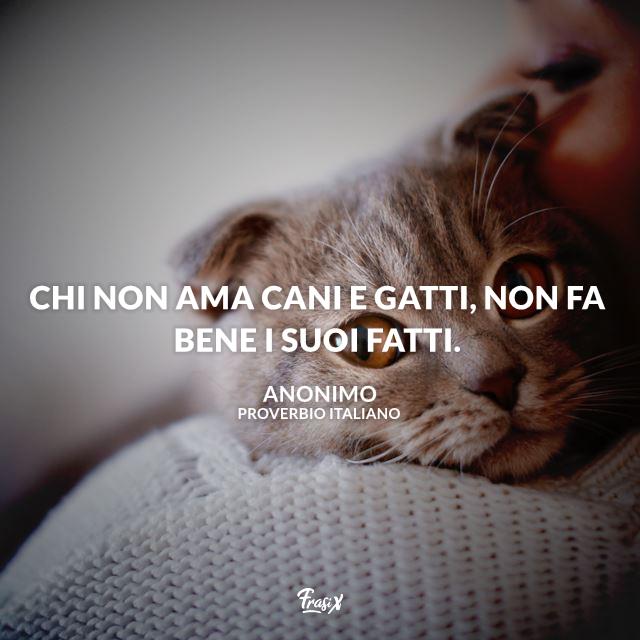 Proverbi gatti