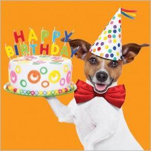 Un cagnolino con una torta - Immagini di buon compleanno, le più simpatiche da scaricare gratis