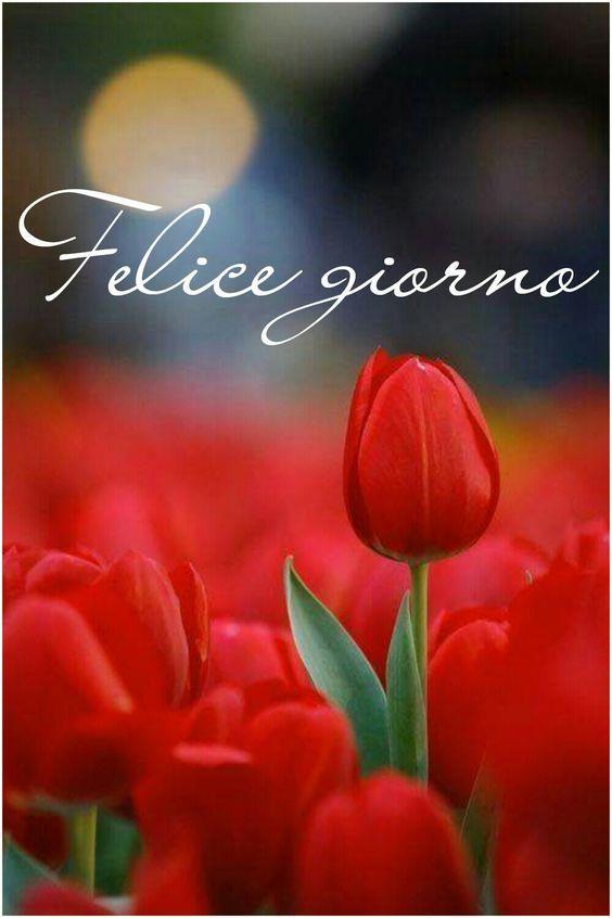 Campo di tulipani con frase Felice giorno