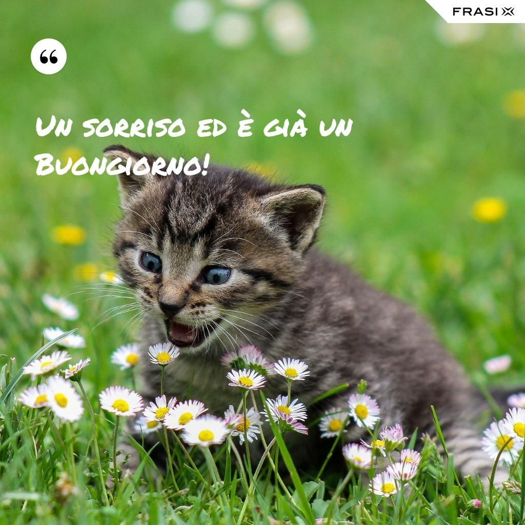 Immagine divertente con gattino e frase Un sorriso ed è già un buongiorno!