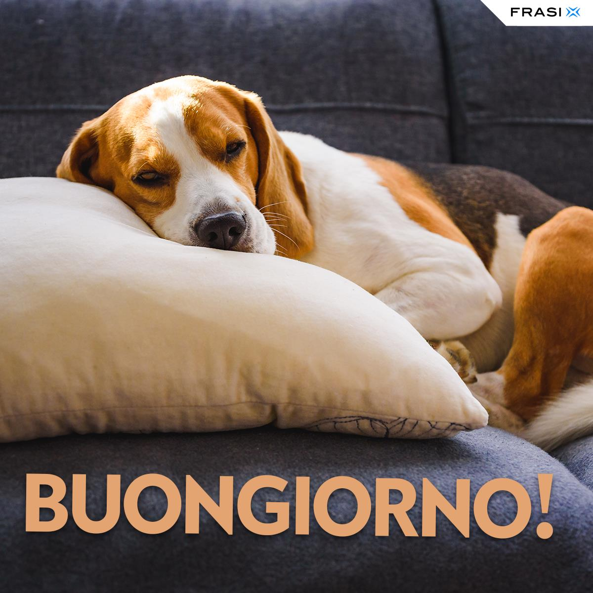 Messaggi buongiorno animali cane sul cuscino
