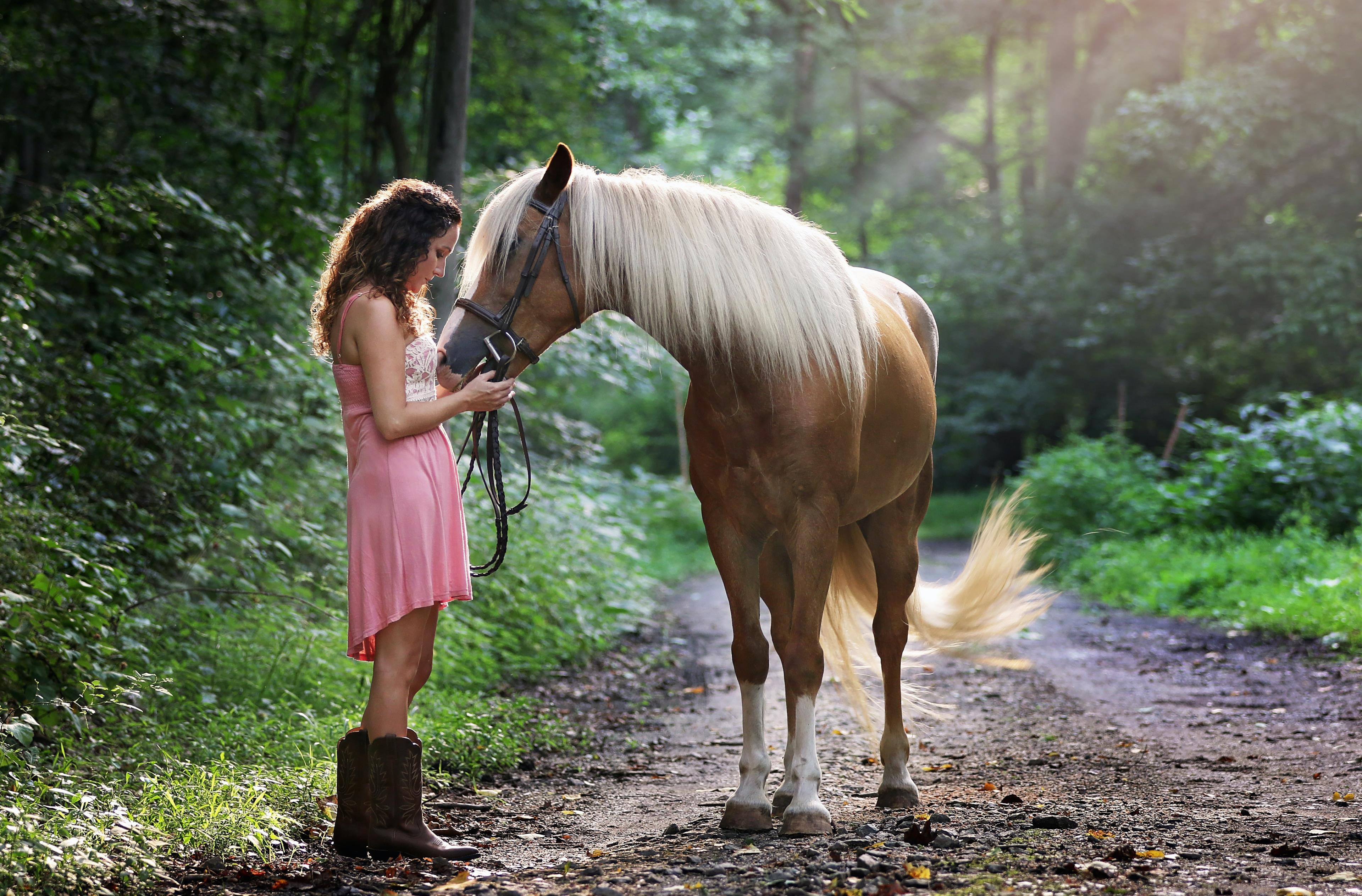 Copertina frasi sui cavalli