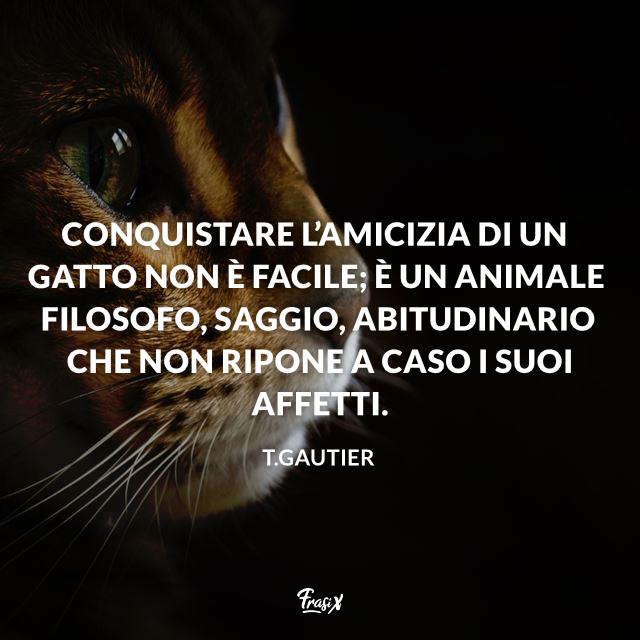 Conquistare l'amicizia di un gatto non è facile; è un animale filosofo, saggio, abitudinario che non ripone a caso i suoi affetti.