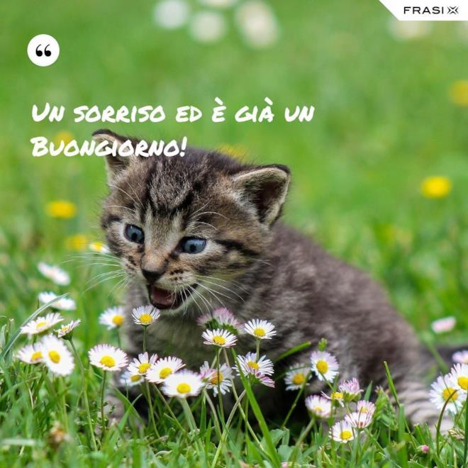 Immagine buongiorno con gattino prato margherite