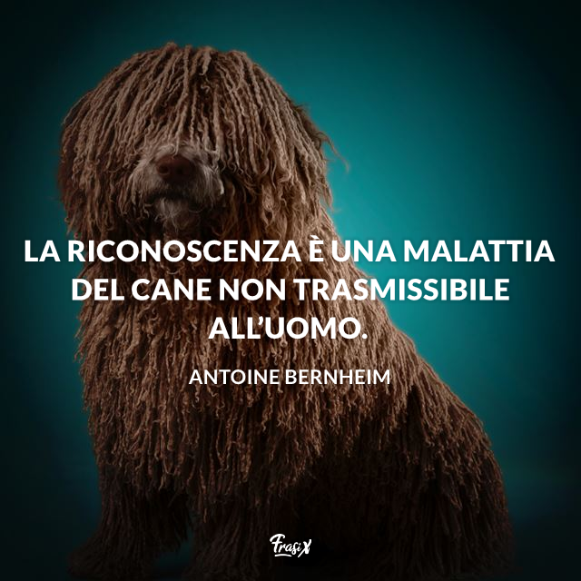 La riconoscenza è una malattia del cane non trasmissibile all'uomo.