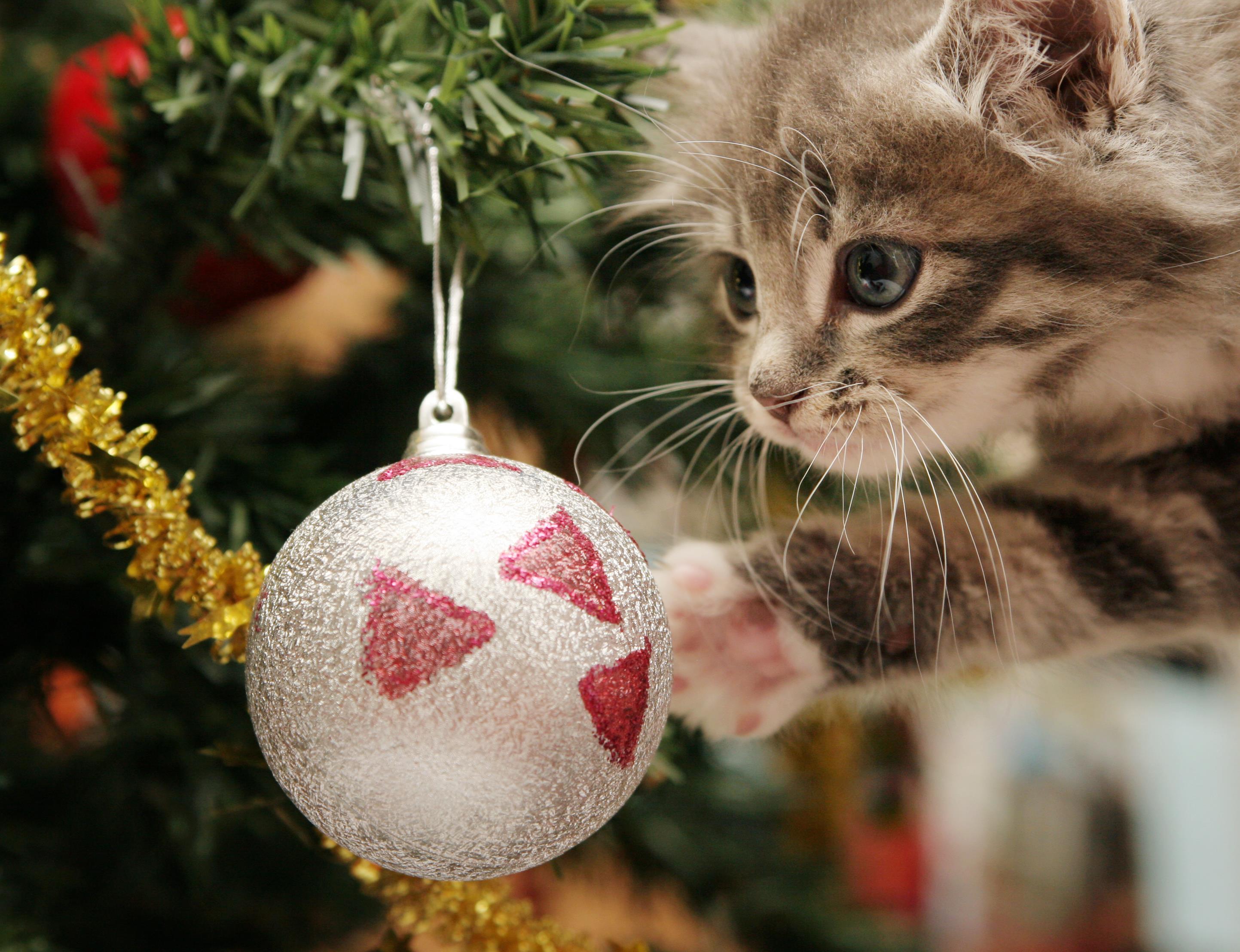 Gattino tocca la pallina di un albero di Natale