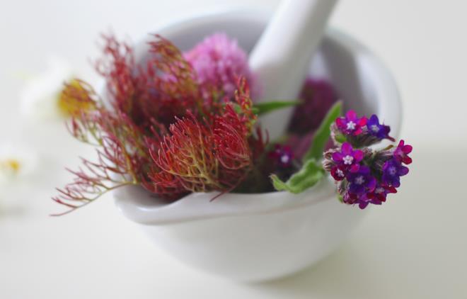 Piante e unguenti come rimedio naturale candida